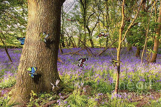 Simon Bratt Photography LRPS - Butterflies in a bluebell woodland