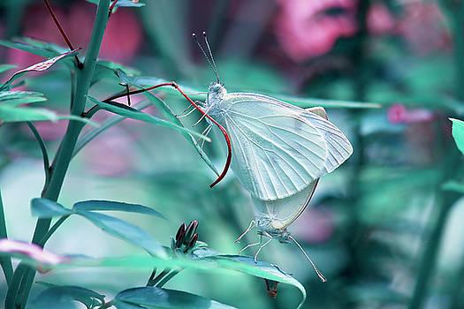 Jill Lang - Butterflies