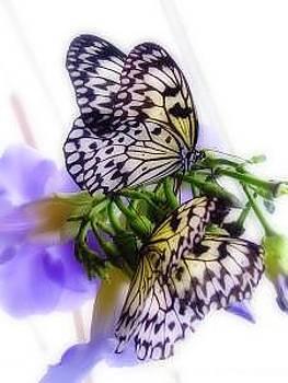 Butterflies by Misty Alger