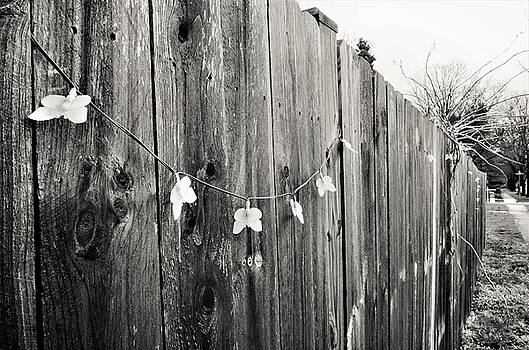 Butterflies On A Rustic Fence by Jeanette O'Toole