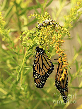 Butterflies on Flowers with Caterpillar Photo by Luana K Perez