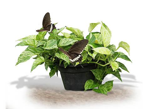 Butterflies on foliage by Ajithaa Edirimane