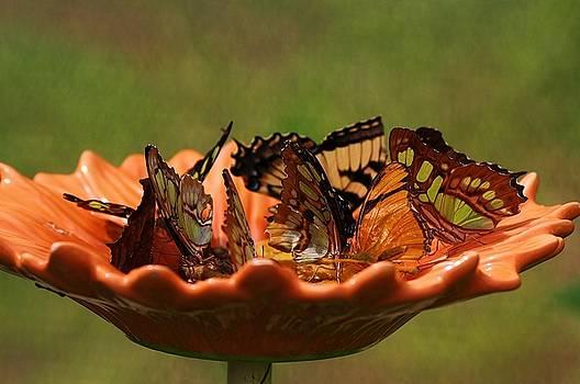 Paulette Thomas - Butterflies