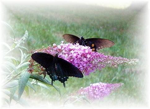 Scarlett Royal - Butterflies