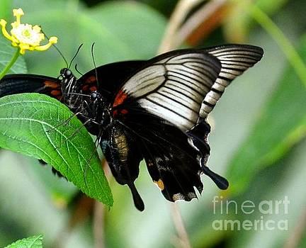 Butterflies  by Stephanie  Bland