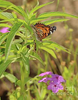 Billy Moore - Butterfly 1