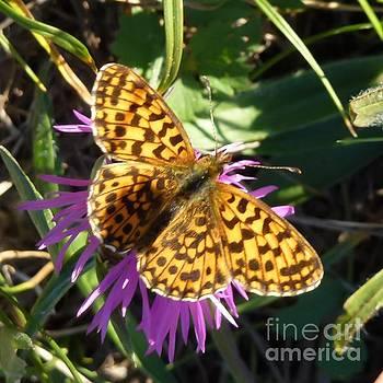 Butterfly 11 by Jean Bernard Roussilhe
