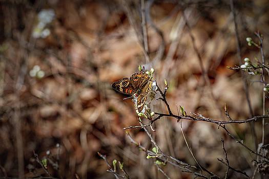 Butterfly 2 by Doug Long