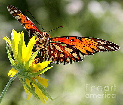 Butterfly 2 by Patricia Alexander
