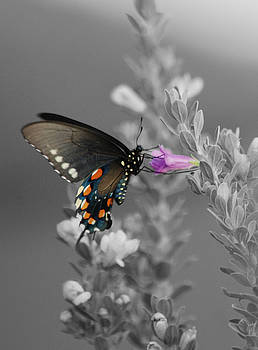 Butterfly And Flower by Jim Wright