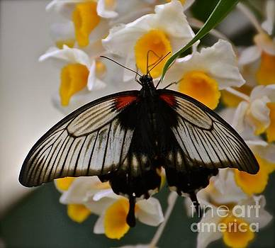 Butterfly and Flowers by Stephanie  Bland
