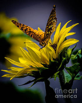 Butterfly and Sunflower #1 by Eric Geschwindner