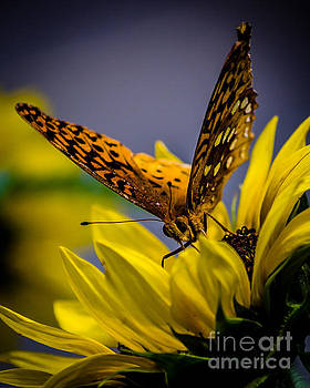 Butterfly and Sunflower #2 by Eric Geschwindner