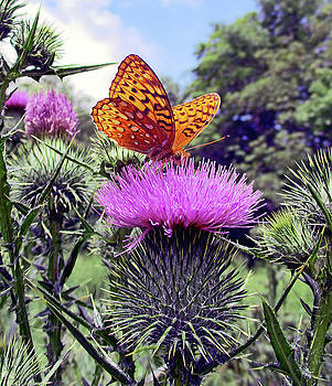 Butterfly And Thistle Flower by Patricia Keller