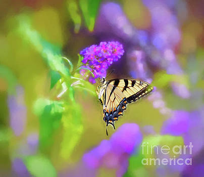 Butterfly Art - Eastern Tiger Swallowtail by Kerri Farley