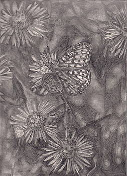 Butterfly by Ashley Vaughn