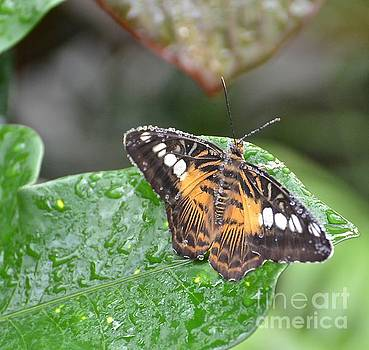 Butterfly at Rest by Stephanie  Bland