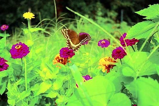 Butterfly at Work by Jill Tennison