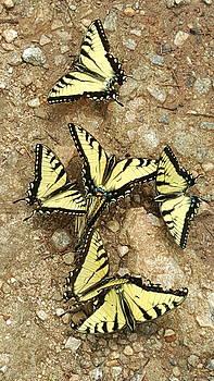 Butterfly Ballroom by Brenda Stevens Fanning