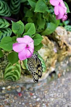 Butterfly Banquet by Brigitte Emme