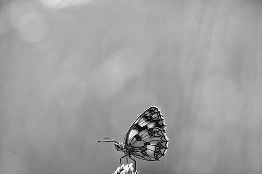 Butterfly by Baptiste De Izarra