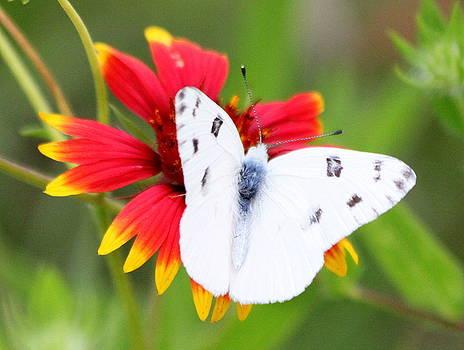Butterfly beauty by Billie Earley