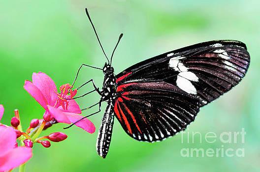 Regina Geoghan - Butterfly Beauty -Doris Longwing