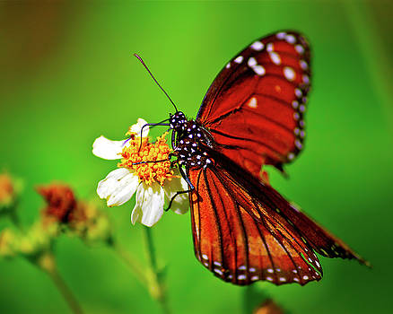 Butterfly Beauty by Mark Andrew Thomas