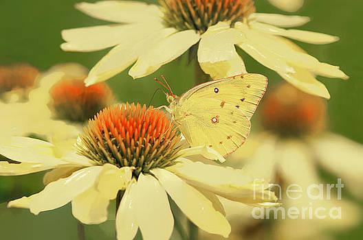 Regina Geoghan - Butterfly Beauty-Orange Sulphur
