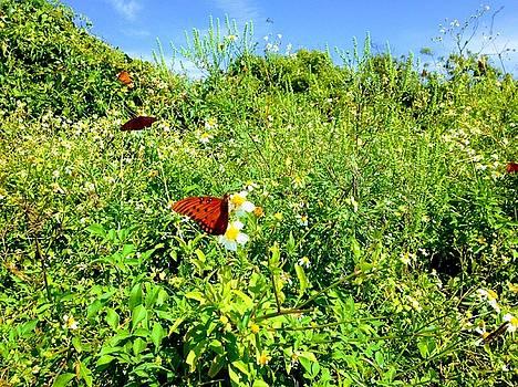 Butterfly Bonanza by Sherry Kuhlkin