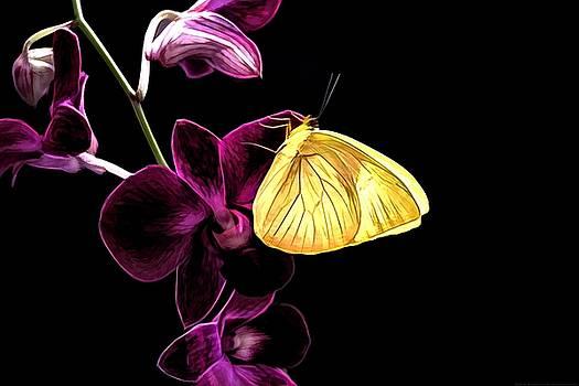Butterfly Brilliance by Chrystyne Novack