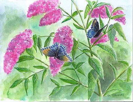 Butterfly Bush by Sheryl Heatherly Hawkins