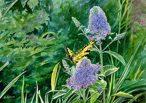 Butterfly Bush by Tom Hedderich