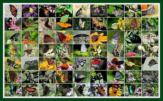 Rosanne Jordan - Butterfly Butterfly Collage