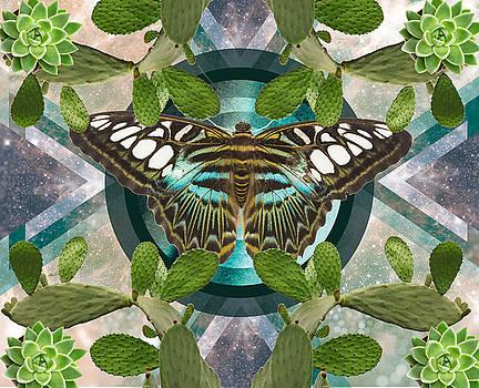 Butterfly Cactus Kaleidoscope by Lori Menna