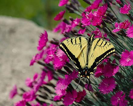 Butterfly by Carl Nielsen