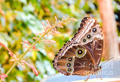 Butterfly by Catherine Hill