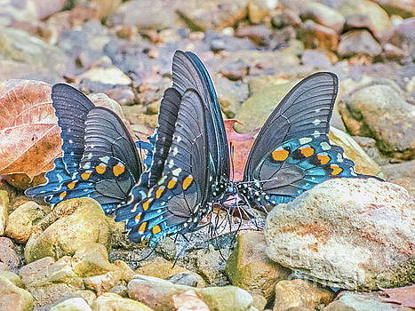 Butterfly Circle by Dragonfleyes Photography and Creations