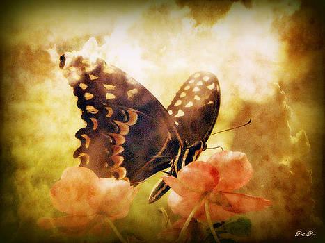 Butterfly Clouds by Dottie Dees