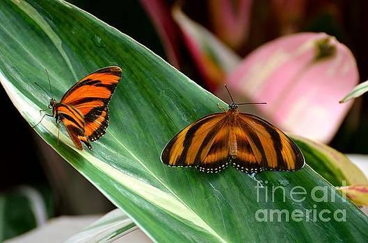 Butterfly Companions by Stephanie  Bland