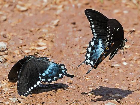 Butterfly Dance by Ron Dubin