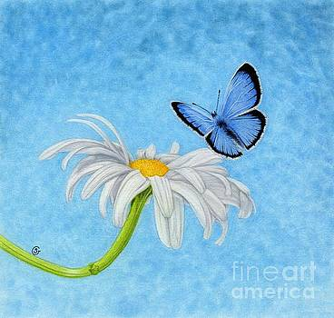 Butterfly Delight by Sherry Goeben