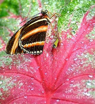 Butterfly Dew by Stephanie  Bland