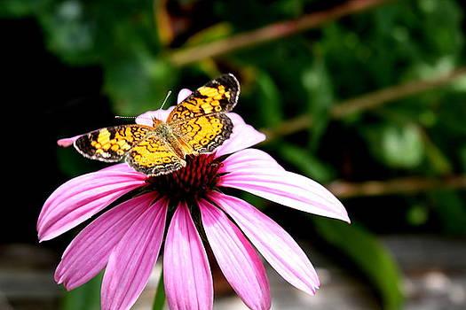 Diane Merkle - Butterfly