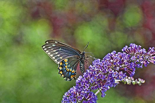 Edward Sobuta - Butterfly Dream