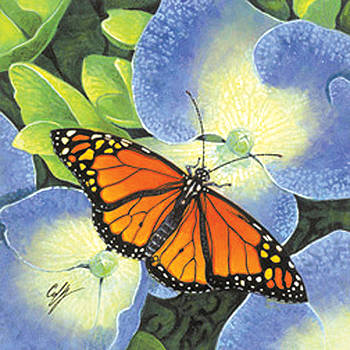 Butterfly by Durwood Coffey