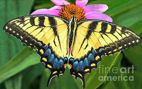 Regina Geoghan - Butterfly-Eastern Tiger Swallowtail