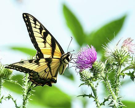 Butterfly Echo by Lara Ellis