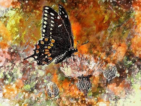Butterfly Energy by Barbara Chichester