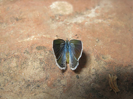 Butterfly Face by Juliana Conley